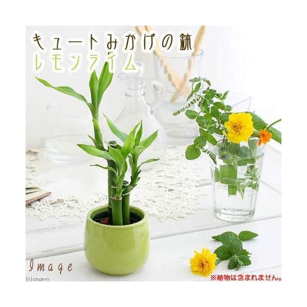 キュートみかげの鉢 レモンライム(φ7.0×H7.0cm)(ハイドロ苗6φに対応)