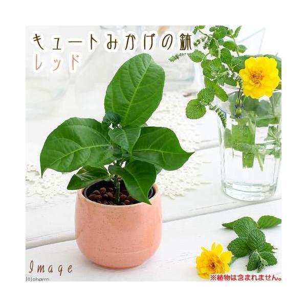 キュートみかげの鉢 レッド(φ7.0×H7.0cm)(ハイドロ苗6φに対応)