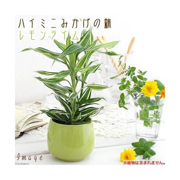 ハイミニみかげの鉢 レモンライム(φ9.5×H9.0cm)(ハイドロ苗9φに対応)
