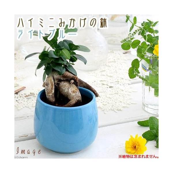 ハイミニみかげの鉢 ライトブルー(φ9.5×H9.0cm)(ハイドロ苗9φに対応)