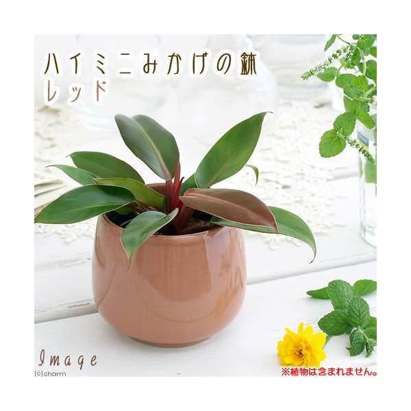 ハイミニみかげの鉢 レッド(φ9.5×H9.0cm)(ハイドロ苗9φに対応)