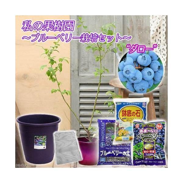 (観葉植物)私の果樹園 ~ブルーベリー栽培セット(ダロー)~(苗木・土・プランター・肥料他6点セット)家庭菜園 お一人様5点限り