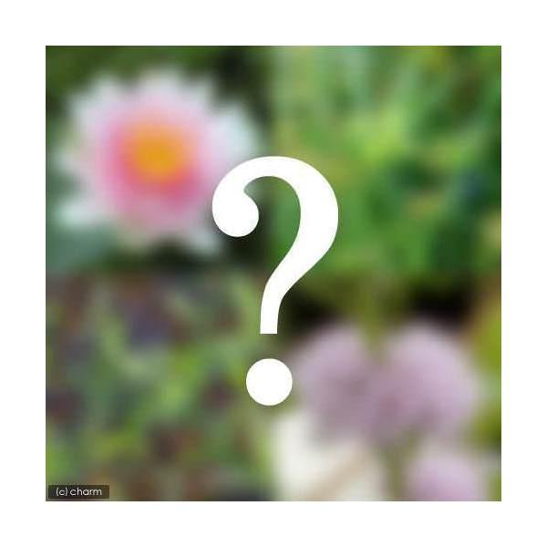 (ビオトープ/水辺植物)ビオトープビギナーセット 温帯性スイレン+水辺植物3種類