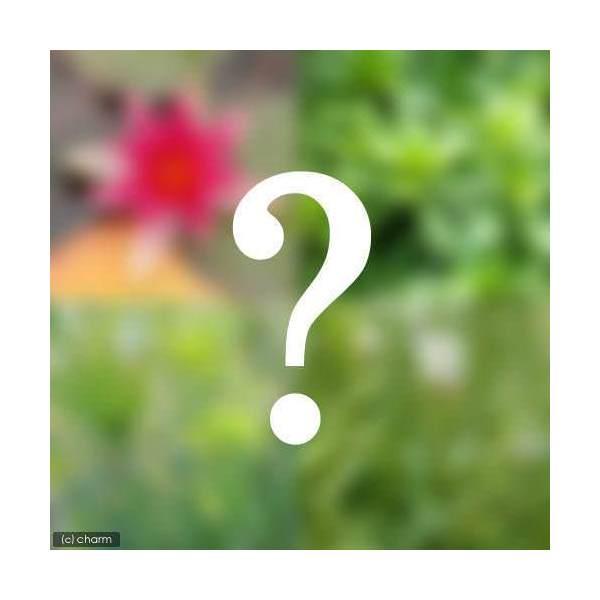 (ビオトープ)水辺植物 ビオトープビギナーセット 姫スイレン+水辺植物3種類