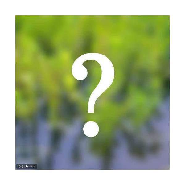(ビオトープ/水辺植物)おまかせ水辺植物 小型種3種セット