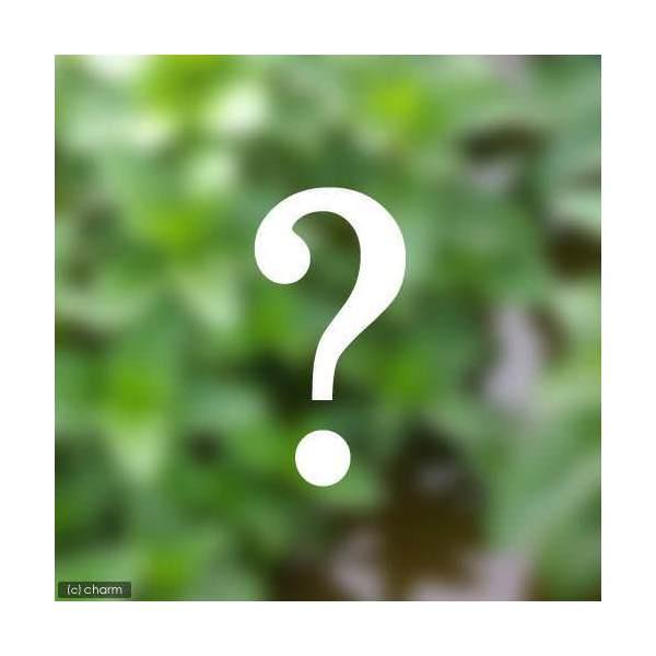 (ビオトープ/水辺植物)おまかせ水辺植物 日本産3種セット