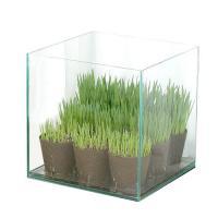 (観葉)猫草 アクロ27 ペットグラス よくばり育成セット(無農薬)