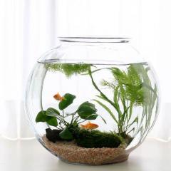 (金魚 水草)おしゃれなガラス製金魚鉢 太鼓鉢 大 金魚飼育セット 説明書付 本州・四国限定