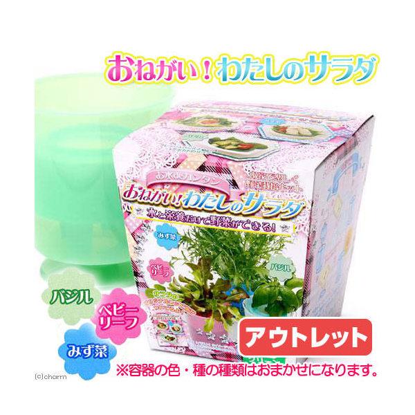 アウトレット品 日本動物薬品 ニチドウ おねがい!わたしのサラダ 容器色・種子おまかせ 家庭菜園