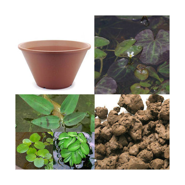 (ビオトープ/水辺植物)はじめての水辺植物栽培セット ヒメシロアサザ 陶鉢440 本州・四国限定