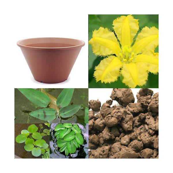 はじめての水辺植物栽培セット アサザ 陶鉢440 本州・四国限定 お一人様1点限り