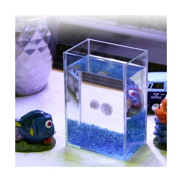 (海水魚)クラゲ サカサクラゲ 癒しのミニアクアリウム 飼育セット(生体2匹付き)本州・四国限定 お一人様1点限り