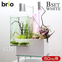 後日生体(熱帯魚) brio35 ホワイト 50Hz 東日本用 Bセット 本州・四国限定