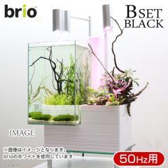 後日生体(熱帯魚) brio35 ブラック 50Hz 東日本用 Bセット 本州・四国限定