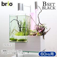 後日生体(熱帯魚) brio35 ブラック 60Hz 西日本用 Bセット 本州・四国限定