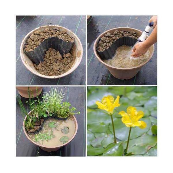 (ビオトープ/水辺植物)ビオトープレイアウトセット アサザ+水辺植物3種 あぜなみ付 本州・四国限定 お一人様1点限り