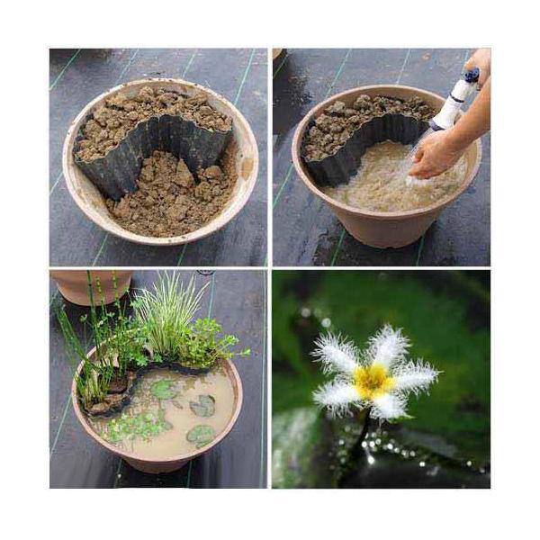 (ビオトープ)水辺植物 ビオトープレイアウトセット ガガブタ+水辺植物3種 あぜなみ付 本州・四国限定 お一人様1点限り