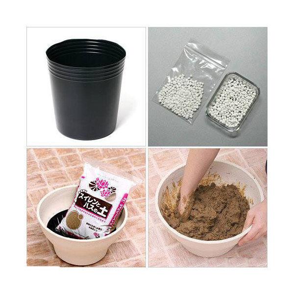 ハス植え替えセット(ビニールポット10号+スイレンとハスの土+固形栄養素)