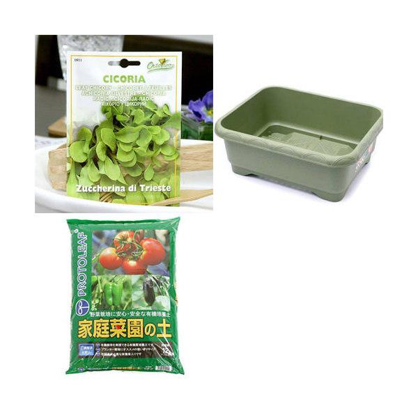 イタリア野菜の種 リーフチコリー・トリエステを育てよう たのしい栽培セット 家庭菜園