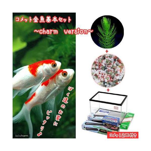 (金魚)コメット 金魚飼育セット charm version 45cm水槽  説明書付 本州・四国限定