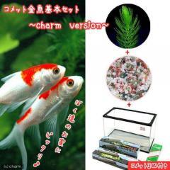 (金魚)コメット 金魚飼育セット charm version 60cm水槽 説明書付 本州・四国限定