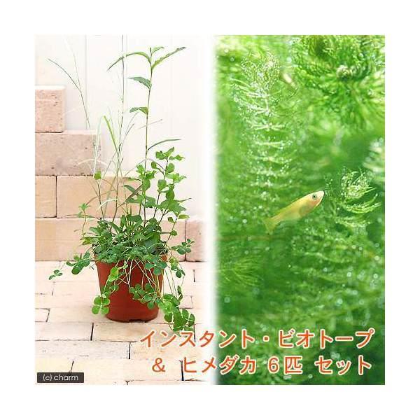 (ビオトープ)(めだか)(淡水魚)インスタント・ビオトープ+ヒメダカ(6匹) 説明書付 本州四国限定