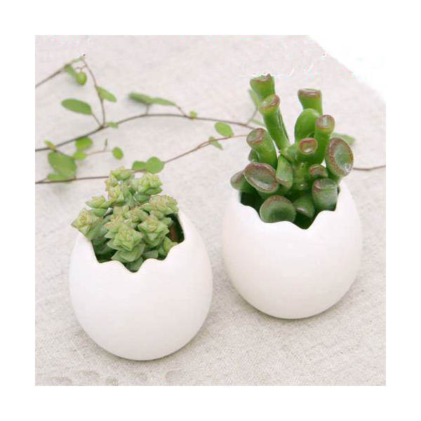 (観葉植物)私のオアシス 恋が生まれるたまごチビ 多肉1種( 2鉢セット) 説明書付き 北海道冬期発送不可