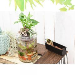 (熱帯魚 水草)私のアクアリウム アクアテリア P150 ベタ飼育セット(生体・植物・ヒーター付き)おしゃれ水槽セット 本州・四国限定