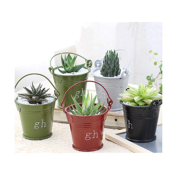 (観葉植物)私のオアシス ハオルチアのミニバケツ植え( 3鉢セット) 説明書付き