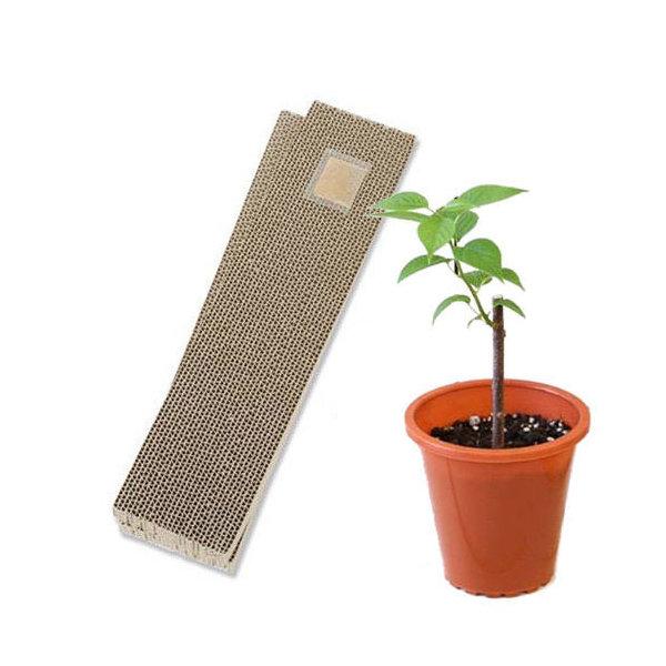 (観葉植物)みっちゃんホンポ またたびの苗 & 爪とぎ カリカリくん2枚の (標準タイプ) 家庭菜園