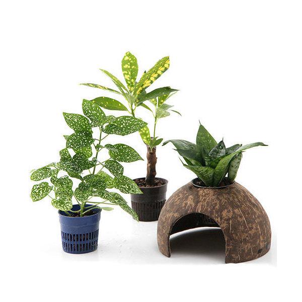 (観葉植物)ココナッツシェルター 観葉植物付き 入り口有りタイプ(1セット) 沖縄不可