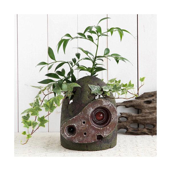 (観葉植物)ジブリプランター 天空の城ラピュタ ロボット兵の思い ナギとヘデラ仕立て 植え込み完成品