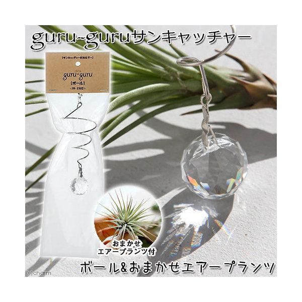 (観葉植物)エアープランツホルダー ぐるぐる サンキャッチャー ボールM(おまかせエアープランツ付) 沖縄不可