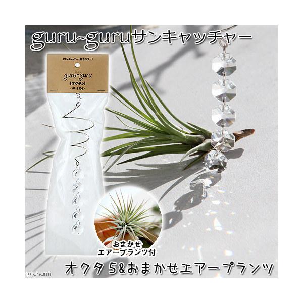 (観葉植物)エアープランツホルダー ぐるぐる サンキャッチャー オクタゴン5(おまかせエアープランツ付) 沖縄不可