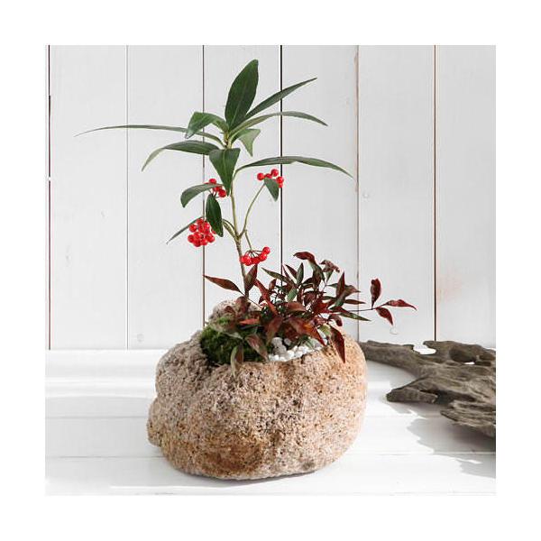 (山野草)盆栽 山野草盆栽 抗火石鉢寄せ植え ヒャクリョウとナンテン Lサイズ(1鉢)