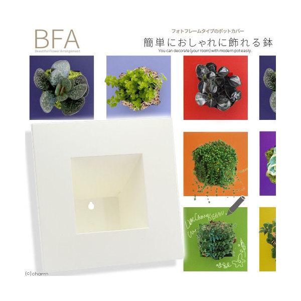立て掛け鉢 BFA-220 白(1個)(W22×D22×H11cm)