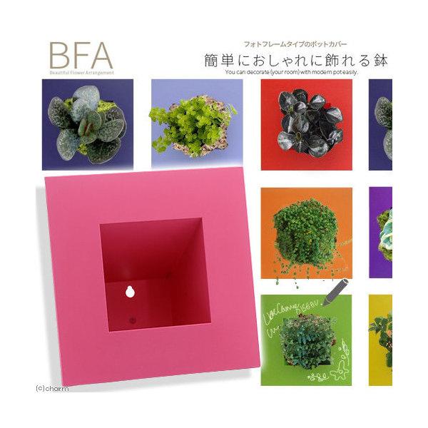 立て掛け鉢 BFA-220 ピンク(1個)(W22×D22×H11cm)