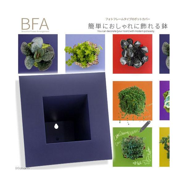 立て掛け鉢 BFA-220 ナス(1個)(W22×D22×H11cm)