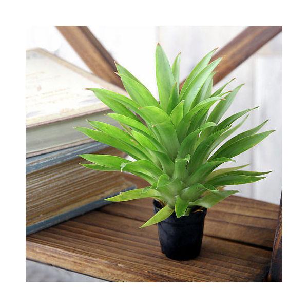 (観葉植物)ビバリウムプランツ グズマニア テレサ 4cmポット入り(1ポット)