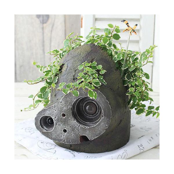 (観葉植物)ジブリプランター 天空の城ラピュタ ロボット兵の思い フィカス プミラ仕立て 植え込み完成品 北海道冬期発送不可 お一人様1点