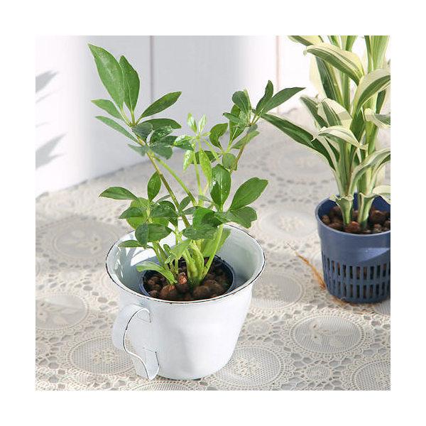 (観葉植物)おまかせハイドロ苗4.5φ・Sサイズ( 3ポットセット)