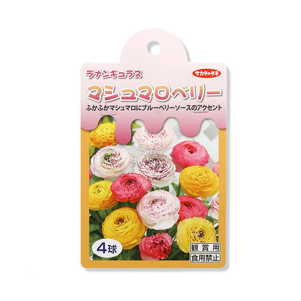 (観葉植物)ラナンキュラス球根 マシュマロベリー 4球詰(1袋) 北海道冬季発送不可