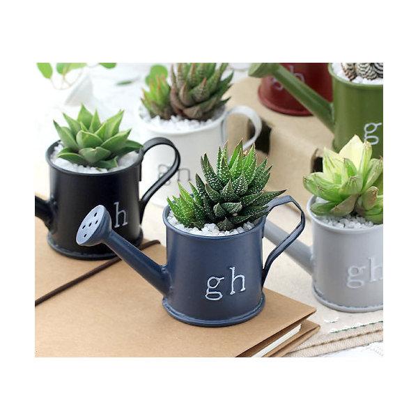 (観葉植物)私のオアシス ハオルチアのミニジョウロ植え( 3鉢セット) 説明書付き