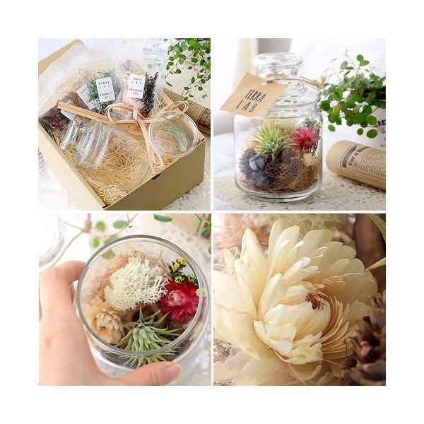 (観葉植物)ギフト ボトルテラリウム作成キット ドライフラワー&ティランジア
