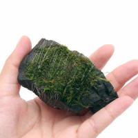 (水草)巻きたて 南米ウィローモス 風山石 SSサイズ(8cm以下)(無農薬)(1個)