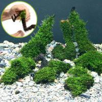 (水草)巻きたて ジャイアント南米ウィローモス 流木 SSサイズ(約10cm)(無農薬)(1本)