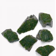 (水草)巻きたて 南米ウィローモス 風山石 ミニサイズ(約5cm)(無農薬)(5個)