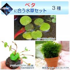 (水草)ベタに合う水草セット 3種(無農薬)(1セット)(説明書付) 熱帯魚