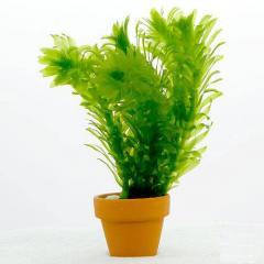 (水草)メダカ・金魚藻 国産 無農薬アナカリス ミニ素焼き鉢(1鉢)