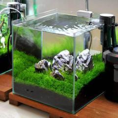 (水草)初めての石組レイアウトセット 30cmキューブ水槽用(水草・風山石のみ) 熱帯魚 本州四国限定
